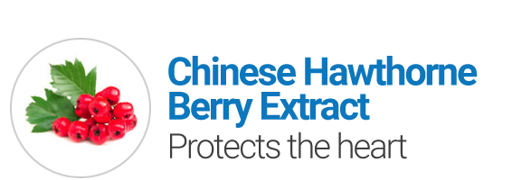 Chinese Hawthorne Berry Extract